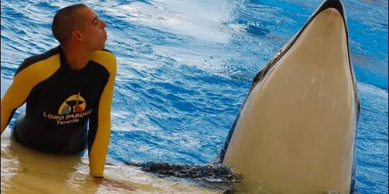 20131105191743-orca-loroparque-560x280.jpg