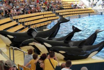 20101018114840-orcas.jpg